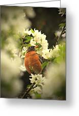 Red Breasted Beauty Greeting Card by Laura Bentley