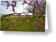 Red Bud Bloom Greeting Card by John Holloway