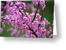 Red Buds Greeting Card