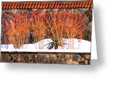 Red Bushes And Rock Wall Greeting Card