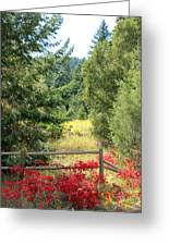 Red Bushes Greeting Card