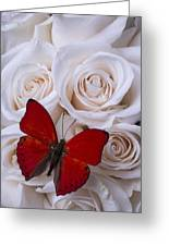 Red Butterfly Among White Roses Greeting Card
