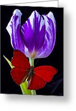 Red Butterfly And Purple Tulip Greeting Card