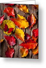 Red Butterfly In Autumn Leaves Greeting Card