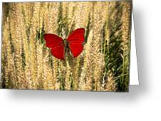 Red Butterfly In The Tall Weeds Greeting Card