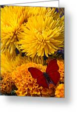 Red Butterfly On African Marigold Greeting Card