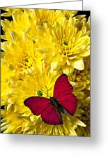 Red Butterfly On Poms Greeting Card