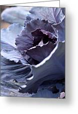Red Cabbage Abstract Greeting Card