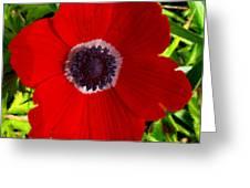 Red Calanit Greeting Card