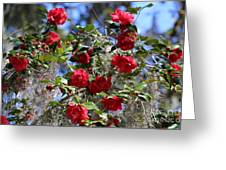 Red Camellias And Blue Sky Greeting Card