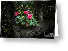 Red Camellias Greeting Card