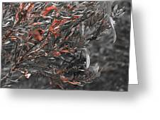 Red Camo Greeting Card by Francis Trudeau
