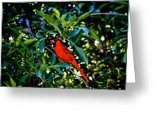 Red Cardinal 1 Greeting Card
