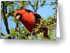 Red Cardinal In Springtime Greeting Card