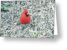 Red Cardinal Greeting Card