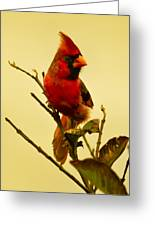 Red Cardinal No. 2 - Kauai - Hawaii Greeting Card