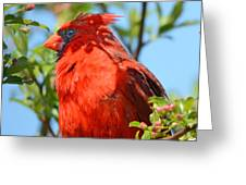 Red Cardinal Pink Blooms Greeting Card