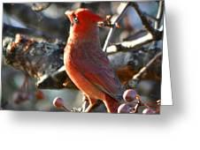 Red Cardinal Pose Greeting Card