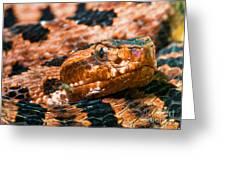 Red Carolina Pygmy Rattlesnake Greeting Card