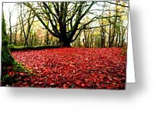 Red Carpet Greeting Card