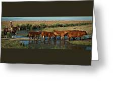Red Cattle Greeting Card