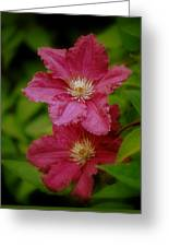 Red Clematis Flowers Greeting Card