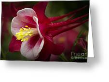 Red Columbine Flower Greeting Card