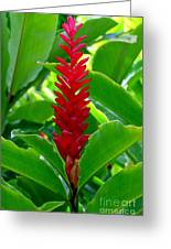 Red Cone Ginger Greeting Card