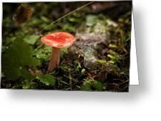 Red Coral Mushroom Greeting Card