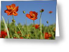 Red Cosmos Flower Greeting Card