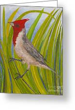 Red-crested Cardinal Greeting Card