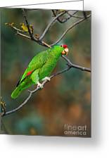 Red-crowned Amazon Greeting Card