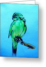 Red Crowned Parakeet Greeting Card by Patricia Howitt