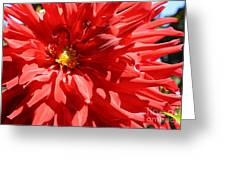 Red Dahlia Greeting Card