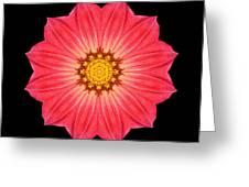 Red Dahlia Hybrid I Flower Mandala Greeting Card