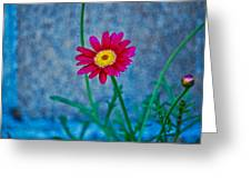 Red Daisy 2 Greeting Card