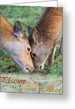 Red Deer  Cervus Elaphus  Head To Head Greeting Card