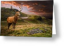Red Deer Stag And Mopuntains Greeting Card