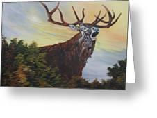 Red Deer - Stag Greeting Card
