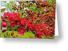 Red Delicious Greeting Card