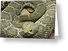 Red Diamond Rattlesnake 3 Greeting Card