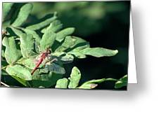 Red Dragon On Compound Leaf Greeting Card