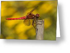 Red Dragonfly Waiting Greeting Card
