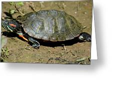 Red Ear Slider Greeting Card