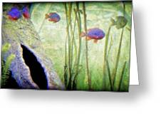 Red Eared Bluegills Greeting Card by Rosemarie E Seppala