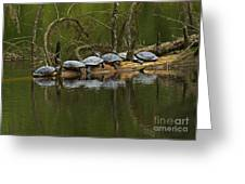 Red-eared Slider Turtles Greeting Card