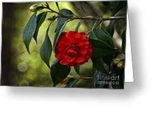 Red Elegance Greeting Card