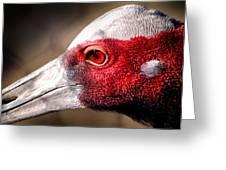 Red Eye Flight Greeting Card by John Grace