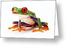 Red-eye Tree Frog 1 Greeting Card