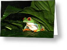 Red Eyed Green Tree Frog Greeting Card